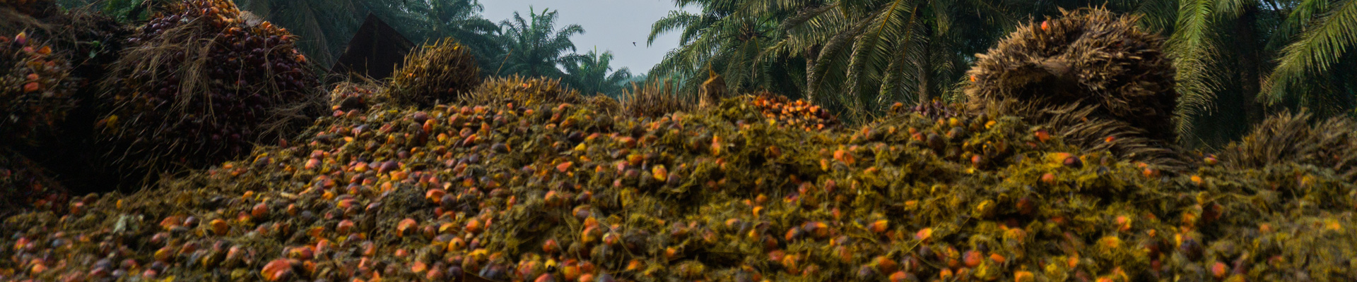 Biomass: ARGUS palm kernel shells (PKS) index
